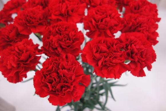 母の日のお花とギフトはまだ間に合うか (1)