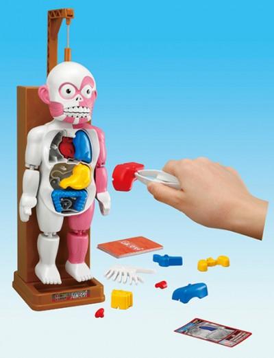 ドキドキクラッシュ人体模型