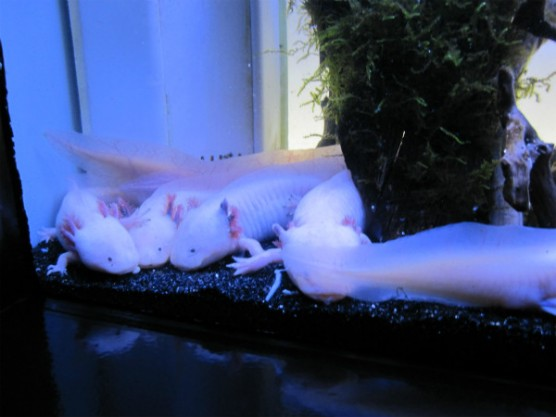 池袋_サンシャイン水族館 (14)