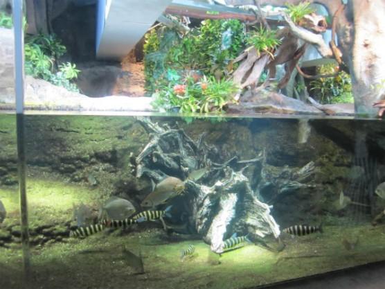 池袋_サンシャイン水族館 (11)