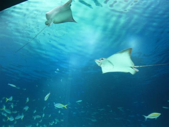 池袋_サンシャイン水族館 (7)