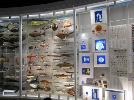 国立科学博物館 (6)