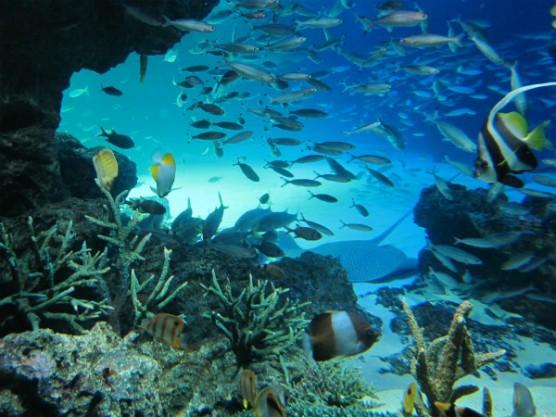 池袋_サンシャイン水族館 (9)