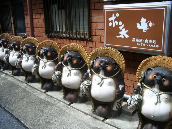 タヌキの写真