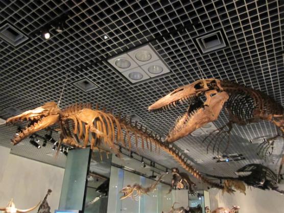 国立科学博物館 (4)