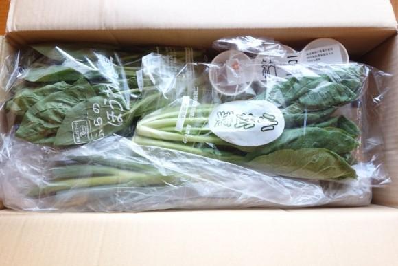大地宅配(大地を守る会)の有機野菜定期コース_8月第1週 (3)