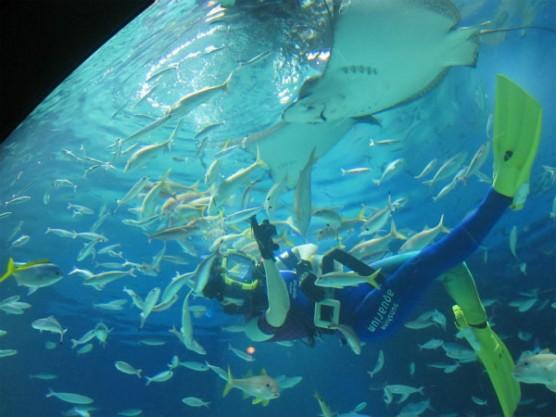 池袋_サンシャイン水族館 (8)