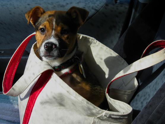 L.L.ビーンのトートバッグの写真