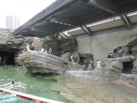 池袋_サンシャイン水族館 (16)