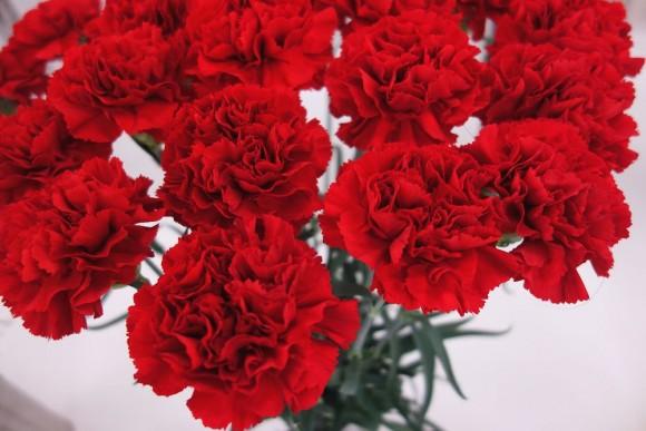 母の日のお花とギフトはまだ間に合うか (2)