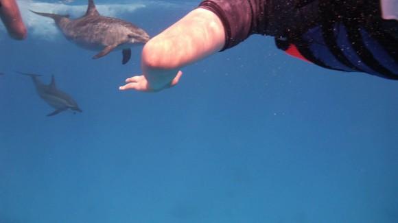 イルカと泳ぐ体験