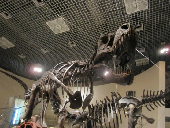 国立科学博物館 (5)