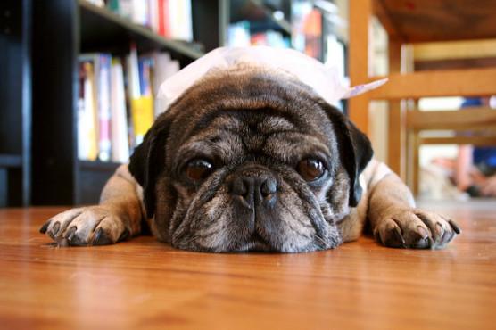 夏の暑さにバテる犬