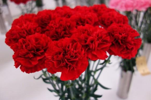 母の日のお花やプレゼントの早割注文特典