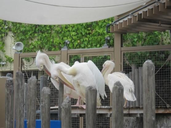 池袋_サンシャイン水族館 (15)